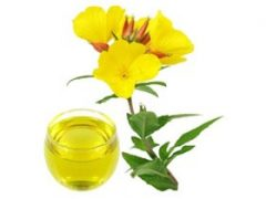 Benefits of Evening Primrose Tea