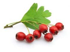 Hawthorn Berry Tea Benefits