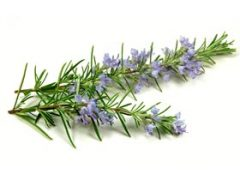 Rosemary Tea Benefits