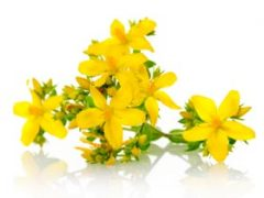 St John's Wort Tea Benefits