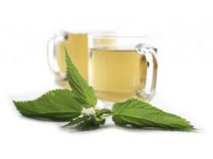 Stinging Nettle Tea Benefits